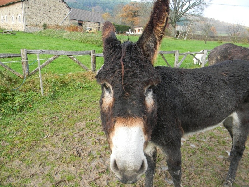 Mes ânes, des ânes de courses ! Sous la neige P1 Dscn0311