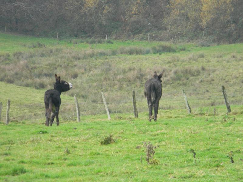 Mes ânes, des ânes de courses ! Sous la neige P1 Dscn0313