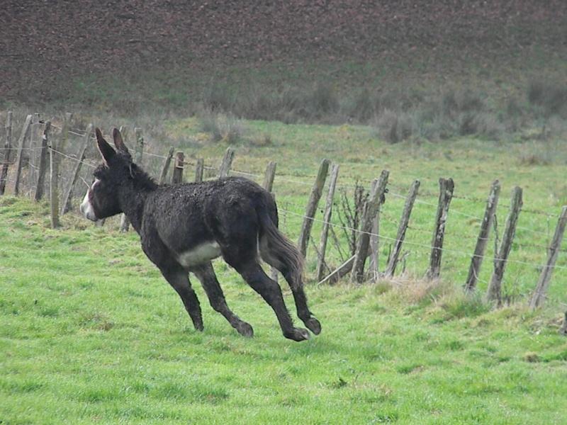 Mes ânes, des ânes de courses ! Sous la neige P1 Dscn0326