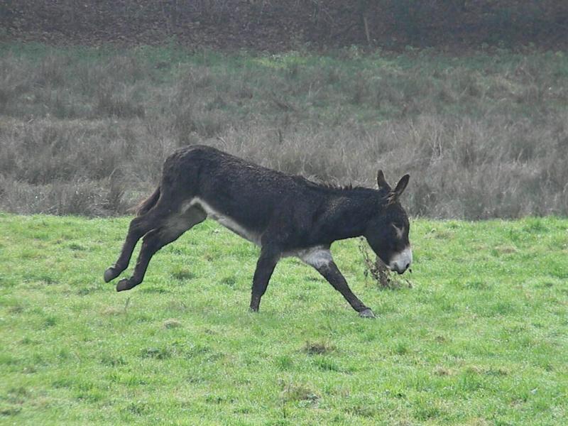 Mes ânes, des ânes de courses ! Sous la neige P1 Dscn0328
