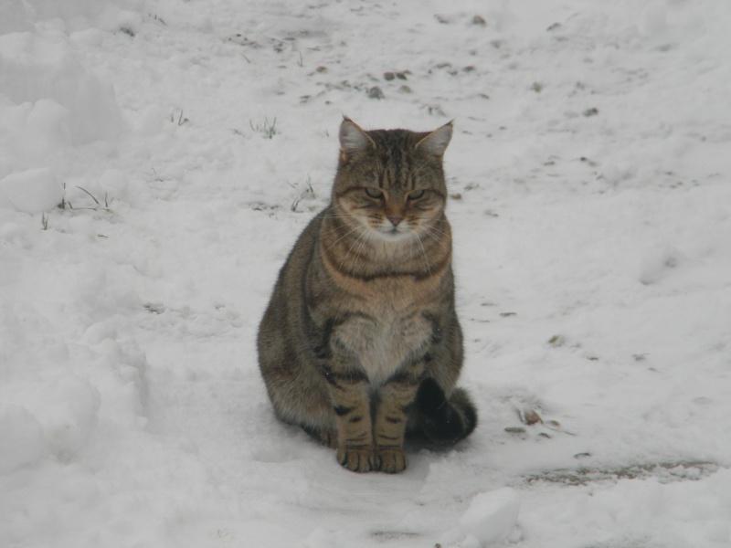15 cm de neige dans le Morvan ! Nouvelles P1 et P2 Dscn0610