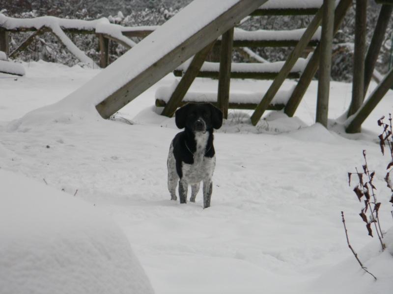 15 cm de neige dans le Morvan ! Nouvelles P1 et P2 Dscn0612