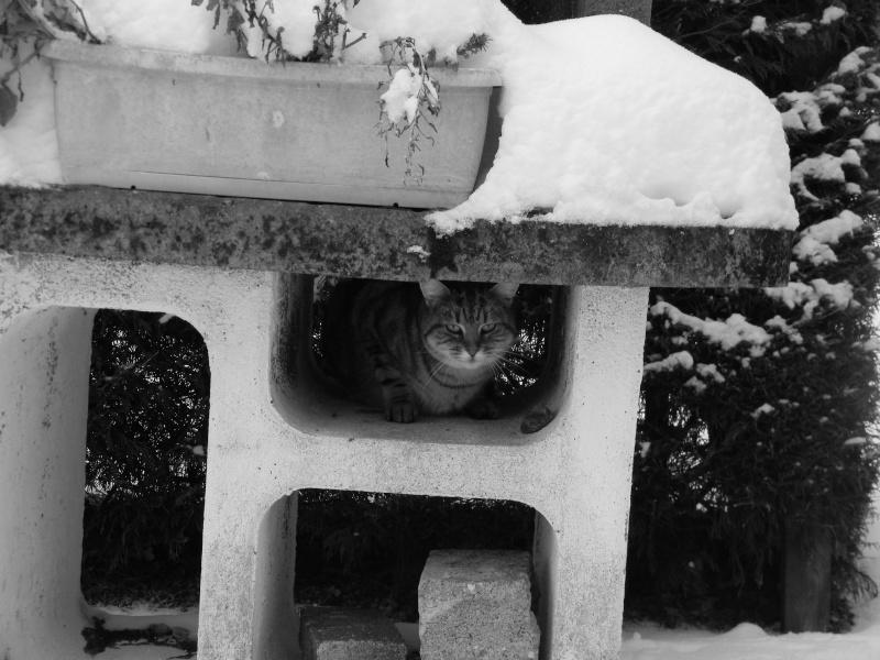 15 cm de neige dans le Morvan ! Nouvelles P1 et P2 Dscn0616