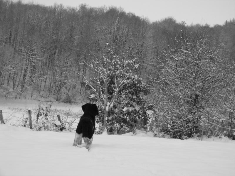 15 cm de neige dans le Morvan ! Nouvelles P1 et P2 Dscn0620