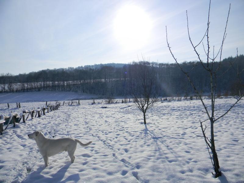 15 cm de neige dans le Morvan ! Nouvelles P1 et P2 Dscn0623
