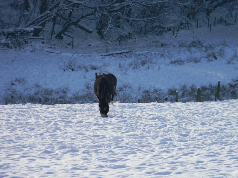 15 cm de neige dans le Morvan ! Nouvelles P1 et P2 Dscn0624