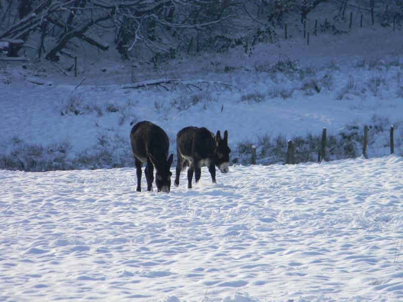 15 cm de neige dans le Morvan ! Nouvelles P1 et P2 Dscn0625