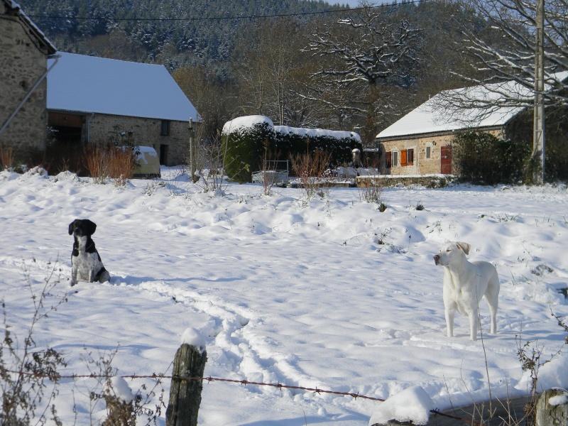 15 cm de neige dans le Morvan ! Nouvelles P1 et P2 Dscn0626