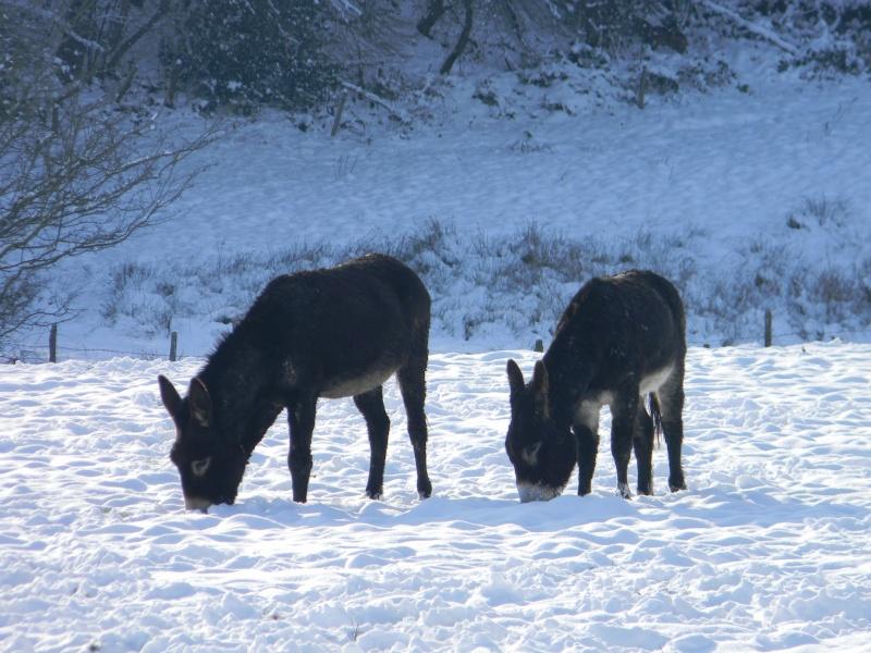 15 cm de neige dans le Morvan ! Nouvelles P1 et P2 Dscn0628