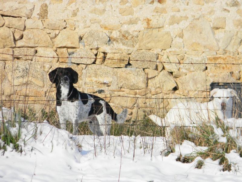 15 cm de neige dans le Morvan ! Nouvelles P1 et P2 Dscn0630