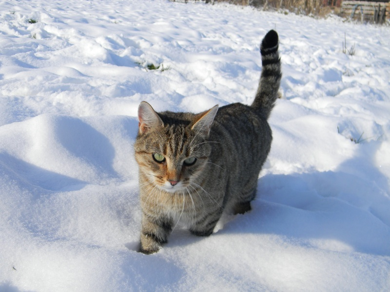 15 cm de neige dans le Morvan ! Nouvelles P1 et P2 Dscn0711