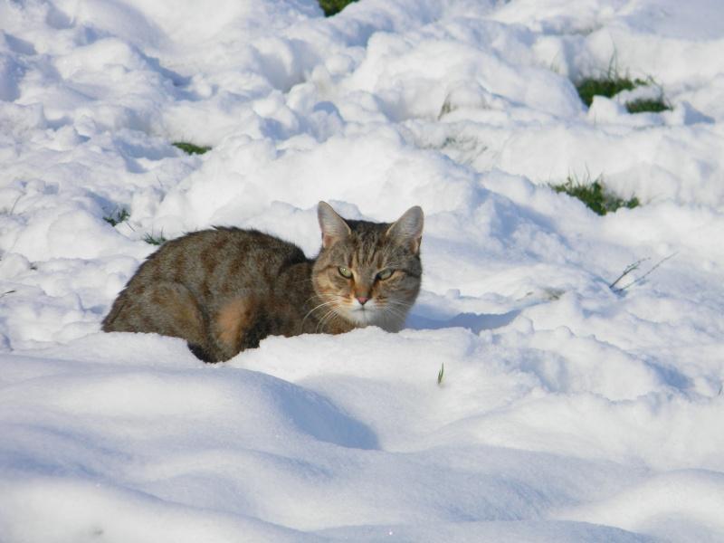 15 cm de neige dans le Morvan ! Nouvelles P1 et P2 Dscn0714