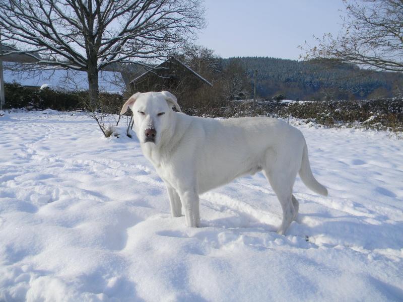 15 cm de neige dans le Morvan ! Nouvelles P1 et P2 Dscn0721