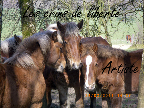 Dpt 70, Avalon, Artiste (Décédé 2015) et Aikido, ONC trait, sauvés par py (Août 2011) Artist12