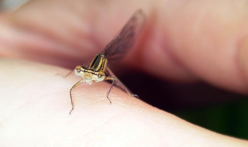 Insectopia Sany0010