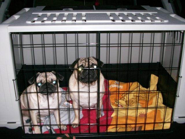 quel vehicule pour transporter vos chiens? 00008511