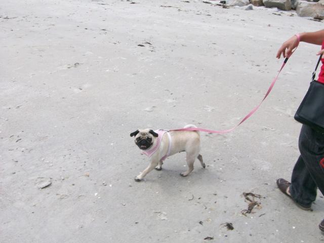 Vos chiens et leurs harnais! Photo  - Page 2 09410