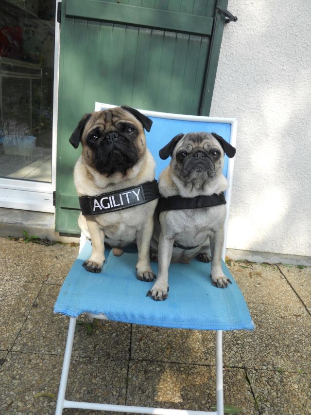 Vos chiens et leurs harnais! Photo  - Page 2 Dscn1010