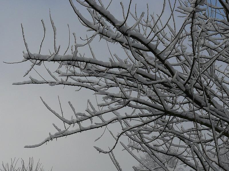 Photos de neige du coté de chez vous - Page 2 Neige-10