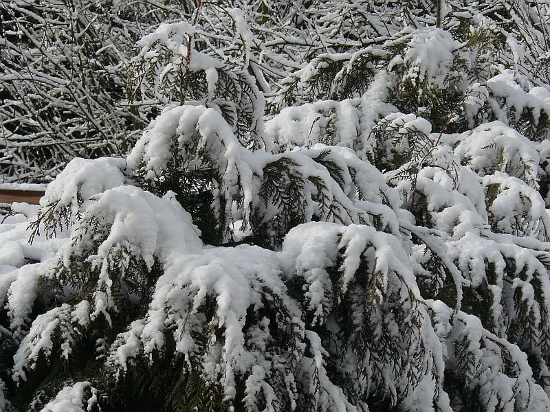 Photos de neige du coté de chez vous - Page 2 Neige-11