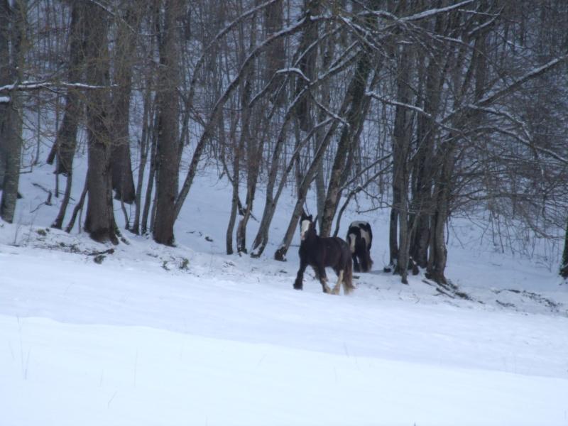Bentley de la vallée du Lomont (News page 5) 2009_035