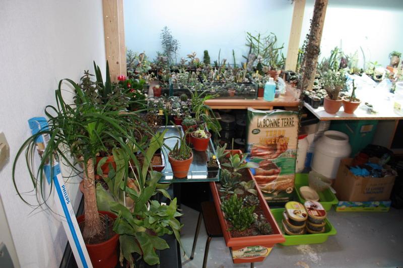 dans quoi planter des plantes grasses? Img_3510