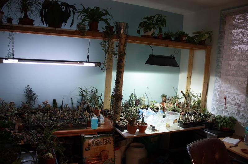 dans quoi planter des plantes grasses? Img_3511
