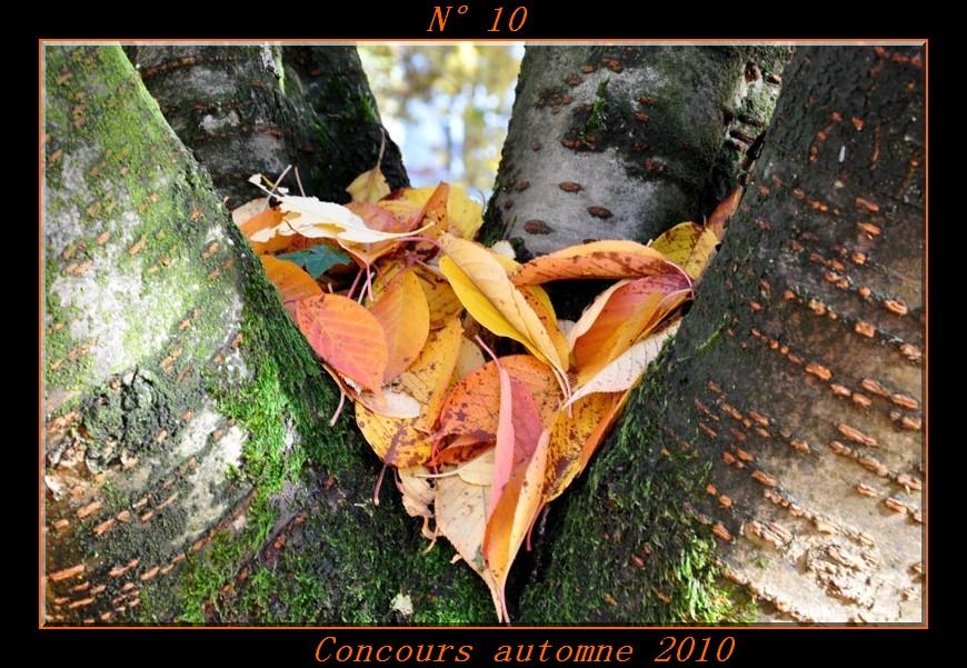 Votes du concours automne 2010 ! Photo110