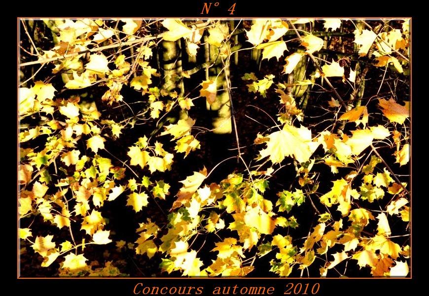 Votes du concours automne 2010 ! Photo410