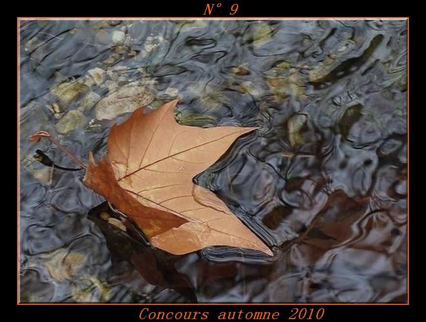 Votes du concours automne 2010 ! Photo910