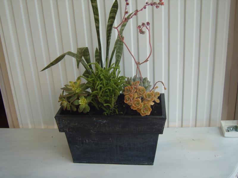 PLANTES GRASSES Bougai15