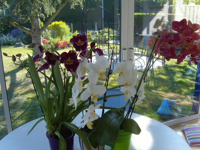 deux nouvelles Orchid11
