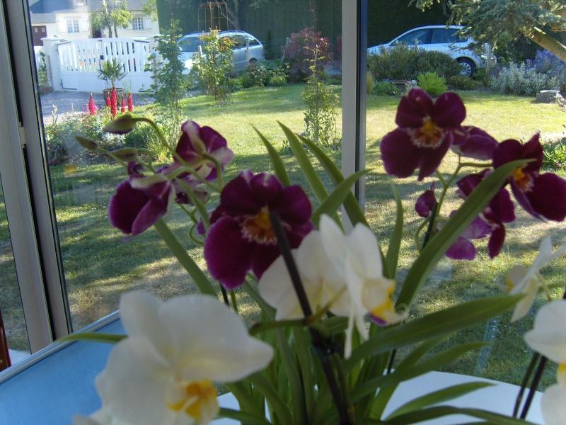 deux nouvelles Orchid12