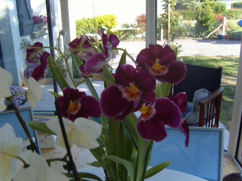 deux nouvelles Orchid13