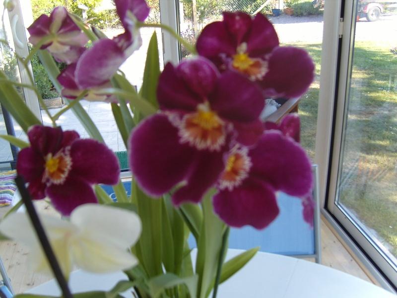 deux nouvelles Orchid14