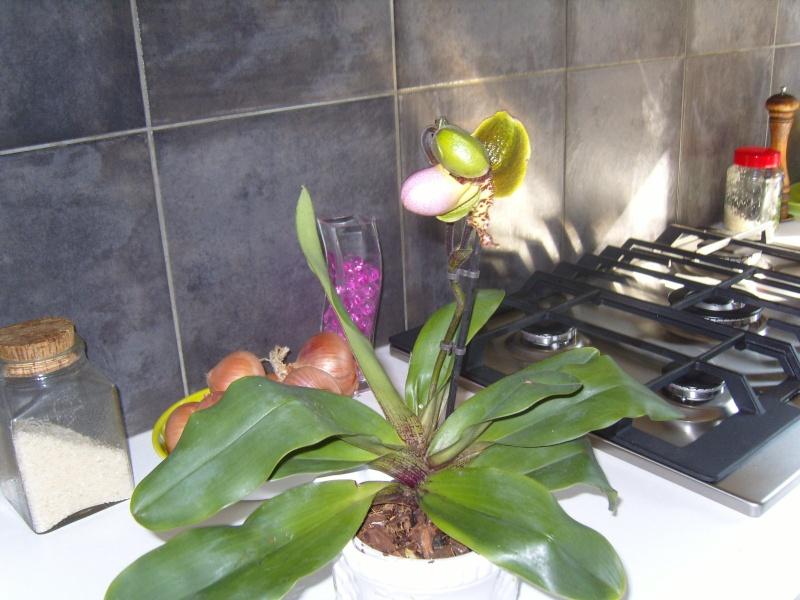 deux nouvelles Orchid16