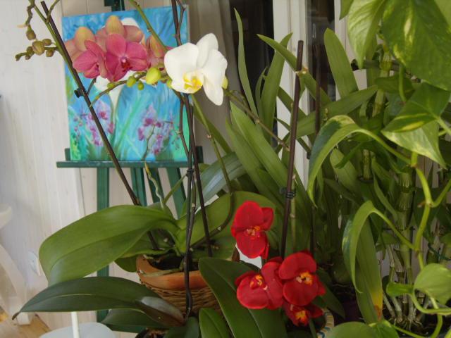 tricherie Orchid27
