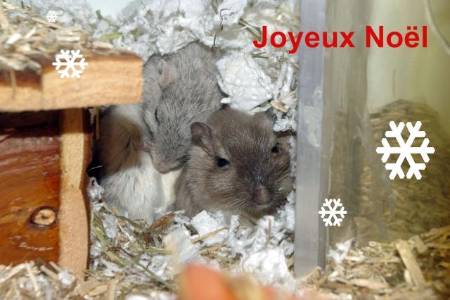 Joyeux Noël ! Noel10