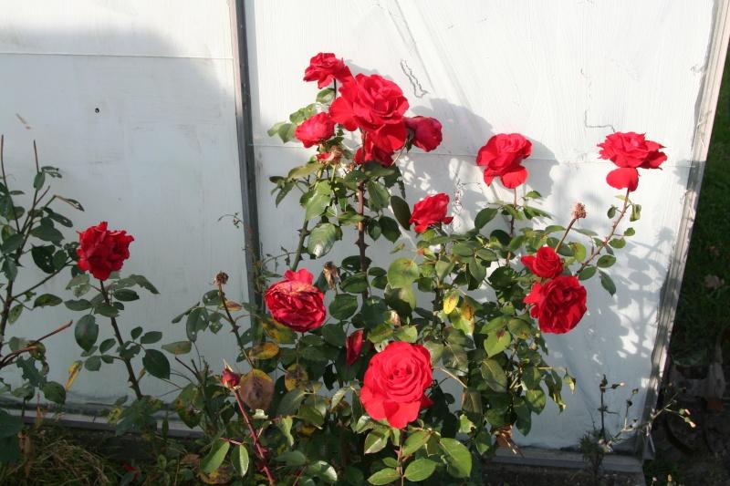 rosiers Img_0211