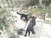 bagarre - 1 bagarre de jeux victoire pour le chat Ailand10
