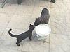 bagarre - 1 bagarre de jeux victoire pour le chat Ailand11