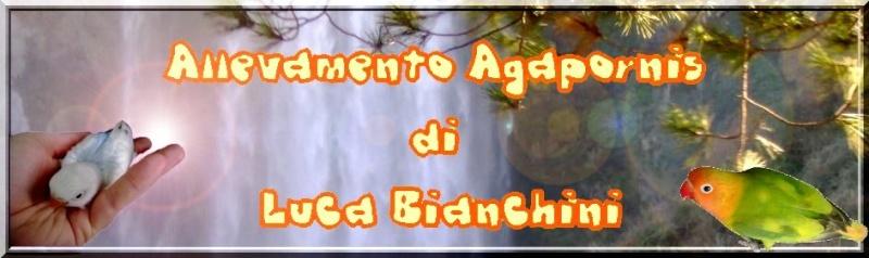 ALLEVAMENTO AGAPORNIS DI LUCA BIANCHINI Banner10