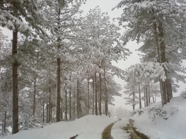 Guri i Bardhe ne Dimer (Foto) 4110