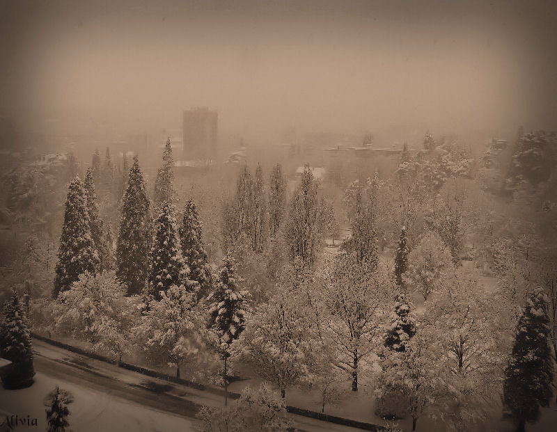 le parc de l'Europe sous la neige.. Parcaa10