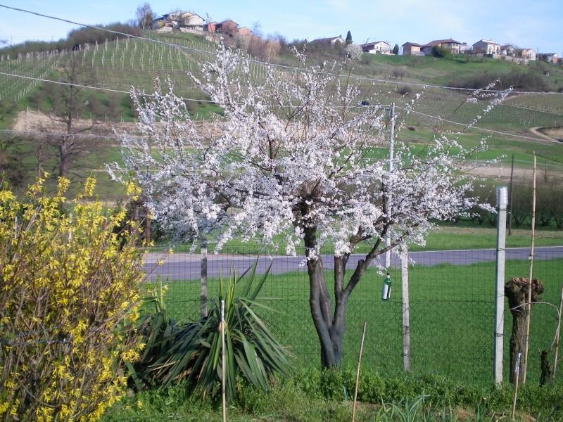 E' primavera 100_0011
