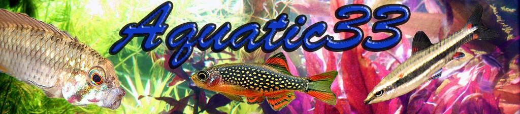 Aquariophilie de la Gironde