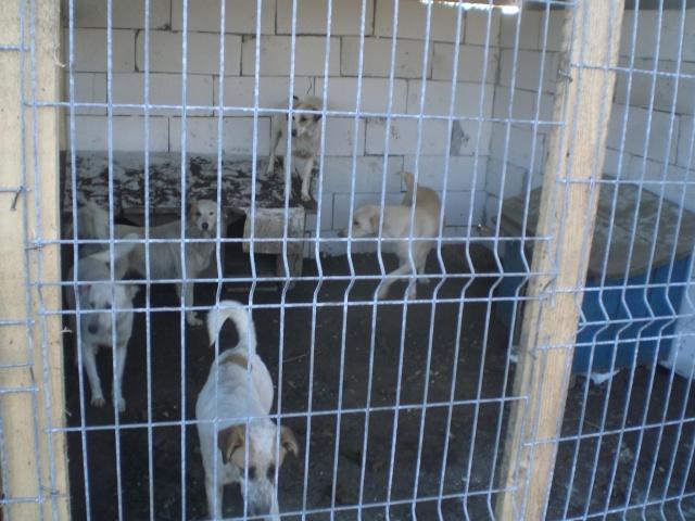 fata - FATA, née le 12/06/2009, arrivée chiot au refuge (soeur de Mickey et fille de Tara) - en FA dans le 49 - GARANT - SOS -R-FB-SC-30MA Cimg2245