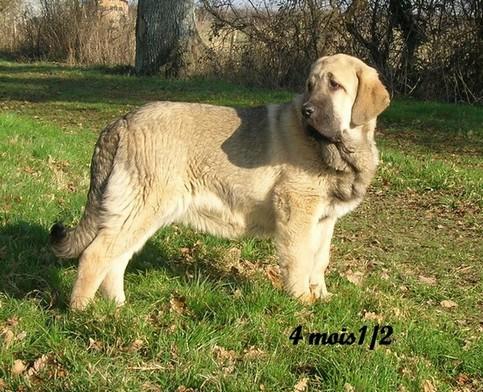 trombinoscope......de nos chiens Cameli10