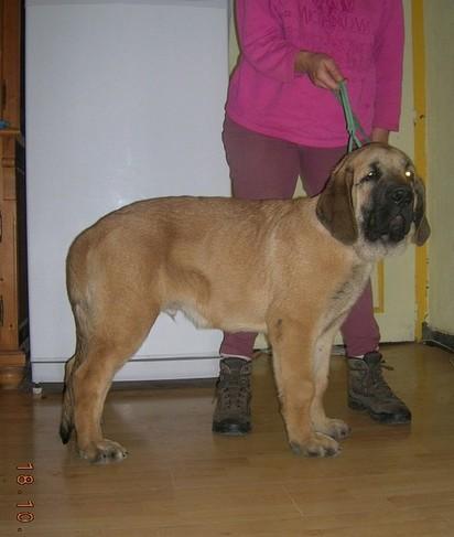 trombinoscope......de nos chiens Kro_4_12