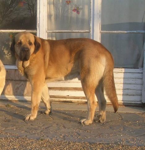 trombinoscope......de nos chiens Kromag12